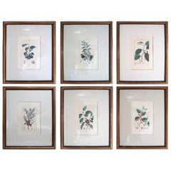 Set of 6 Hand Colored Botanical Etchings