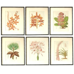 Set of 6 Antique Large Scale Botanical Prints in Faux Bamboo Frames, 1850s