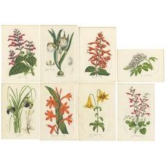 Set of 8 Antique Botany Prints, Salvia, Lily, Wisteria, Iris Tuberosa, 1856