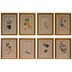 Set of 8 Botanical Prints, Gold Frame