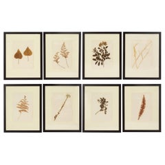 "Set of 8 Framed ""Herbarium"" Botanicals from Formations"