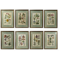 Set of 8 Hand Colored Floral Engravings