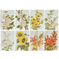 Set of 8 Original Antique Botanical Prints After Kate Rogers