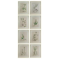 Set of 8 Original Antique Botanical Prints in Faux Ivory Frames