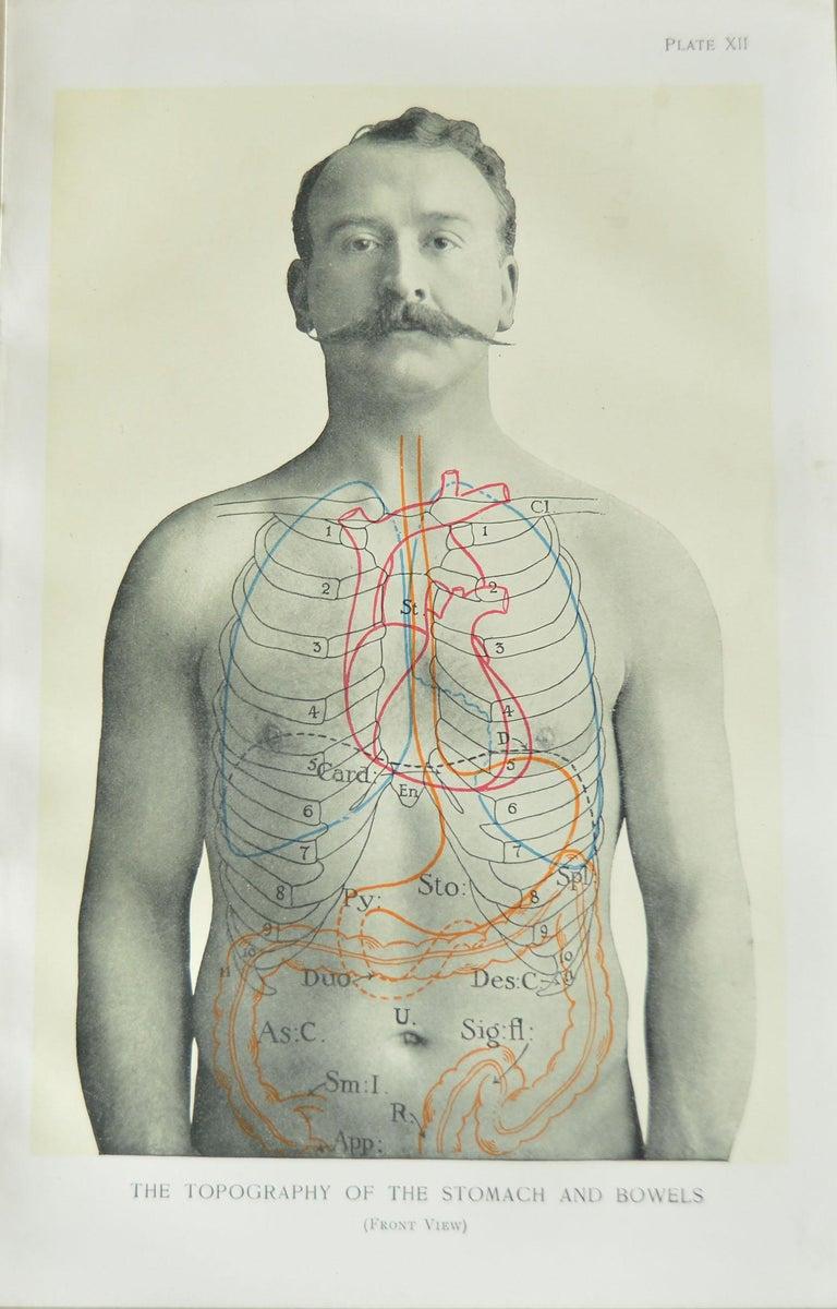 Set of 8 Original Vintage Medical Prints In Good Condition In St Annes, Lancashire