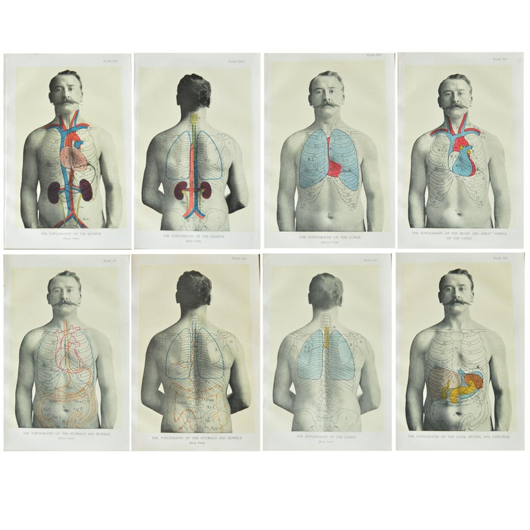 Set of 8 Original Vintage Medical Prints