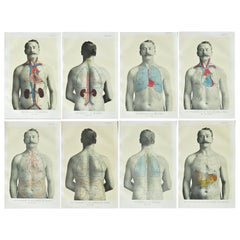 Set of 8 Original Vintage Medical Prints