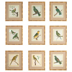 Set of 9 18th Century Martinet Parrots