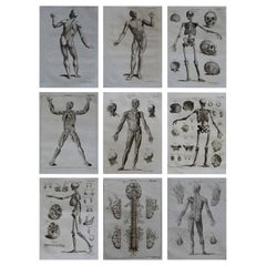Set of 9 Anatomical Prints by A. Bell, 18th Century