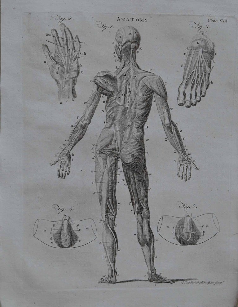 Set of 9 Anatomical Prints by A.Bell, 18th Century For Sale 2