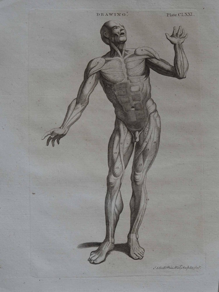 Georgian Set of 9 Anatomical Prints by A.Bell, 18th Century For Sale