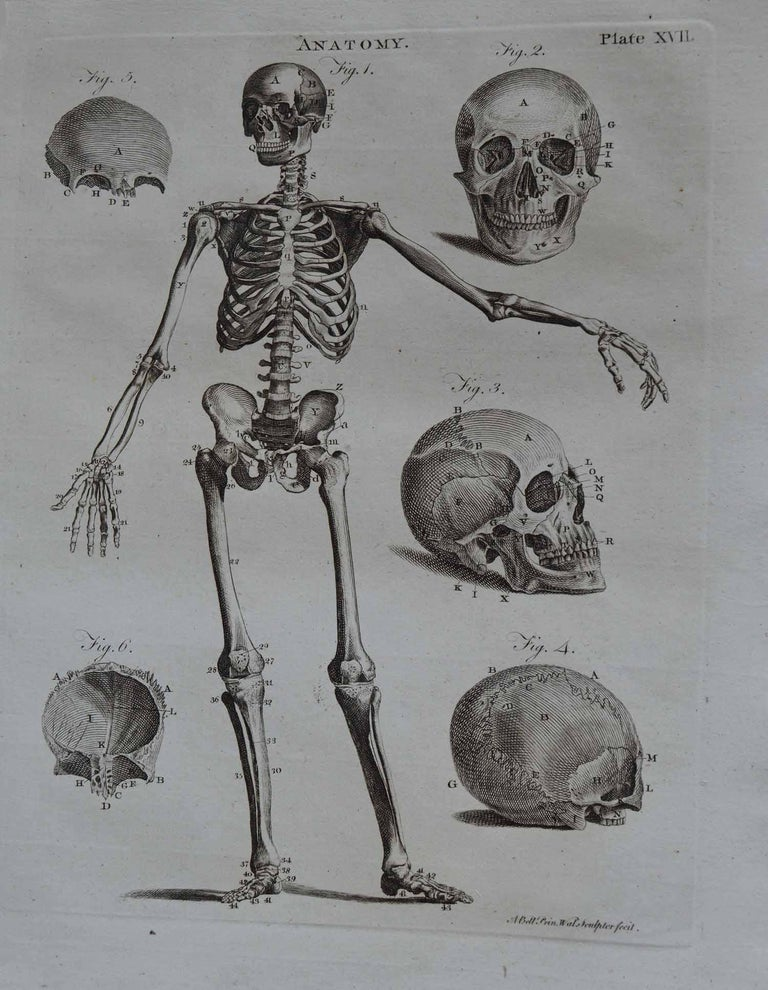 English Set of 9 Anatomical Prints by A.Bell, 18th Century For Sale