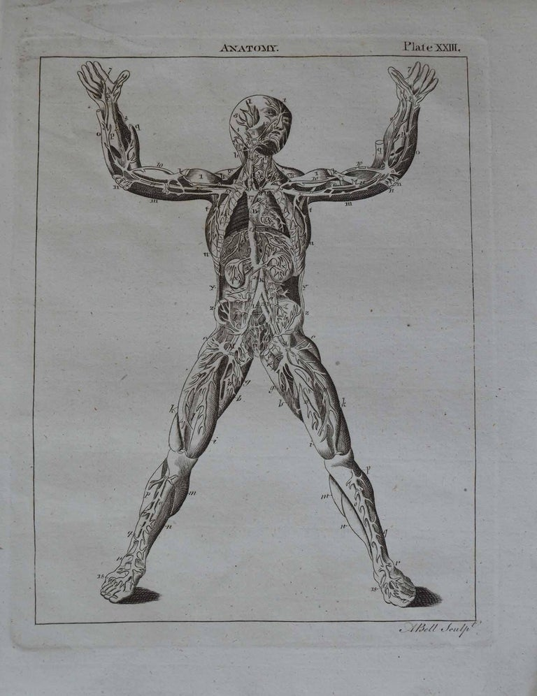 Other Set of 9 Anatomical Prints by A.Bell, 18th Century For Sale