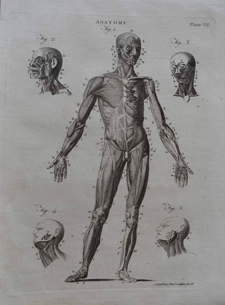 Set of 9 Anatomical Prints by A.Bell, 18th Century In Good Condition For Sale In St Annes, Lancashire
