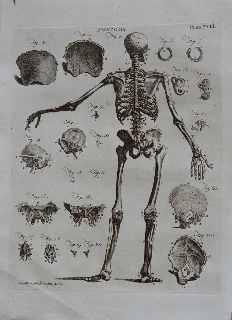 Late 18th Century Set of 9 Anatomical Prints by A.Bell, 18th Century For Sale