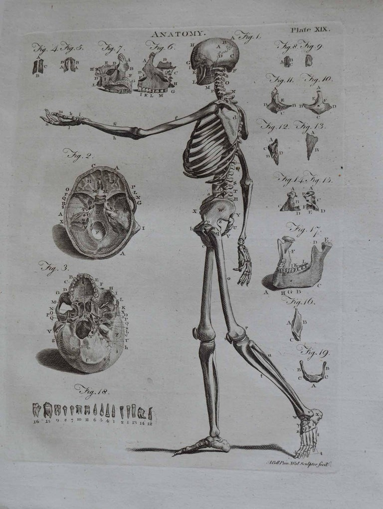 Paper Set of 9 Anatomical Prints by A.Bell, 18th Century For Sale