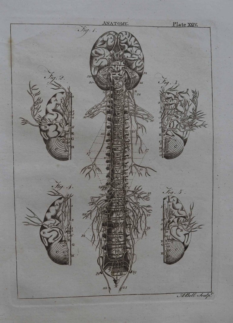Set of 9 Anatomical Prints by A.Bell, 18th Century For Sale 1
