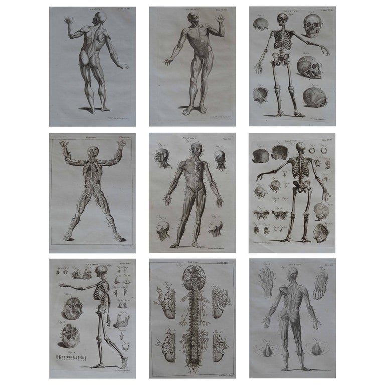 Set of 9 Anatomical Prints by A.Bell, 18th Century For Sale