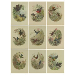 Set of 9 Antique Prints of various Birds, Plants and Trees by Lemercier 'c.1890'