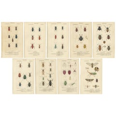 Set of 9 Antique Prints of Various Insects by Turpin, 1816