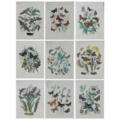 Set of 9 Original Antique Prints of Butterflies, circa 1870
