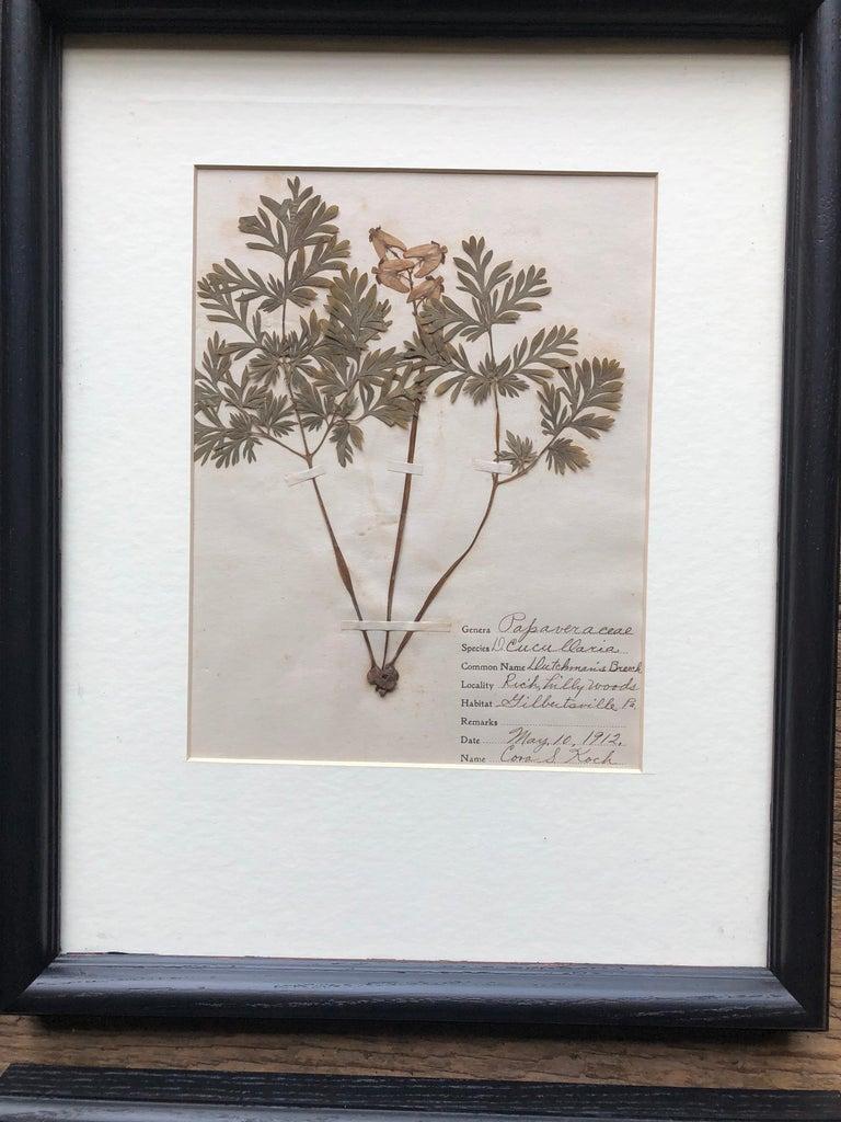 Set of 9 Pressed Botanical Specimens For Sale 3