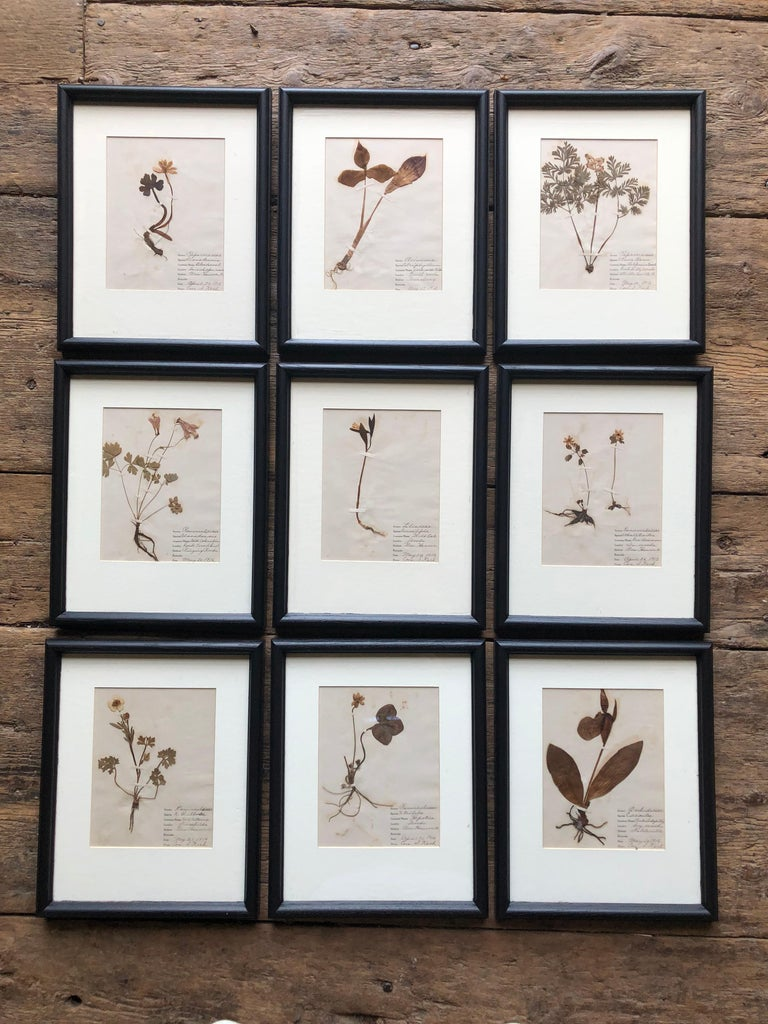 A collection of 9 framed and matted botanical specimens from the early 20th Century, each with hand-written notes detailing genus, species, locality etc. Dated 1916 and signed by Cora S. Koch.