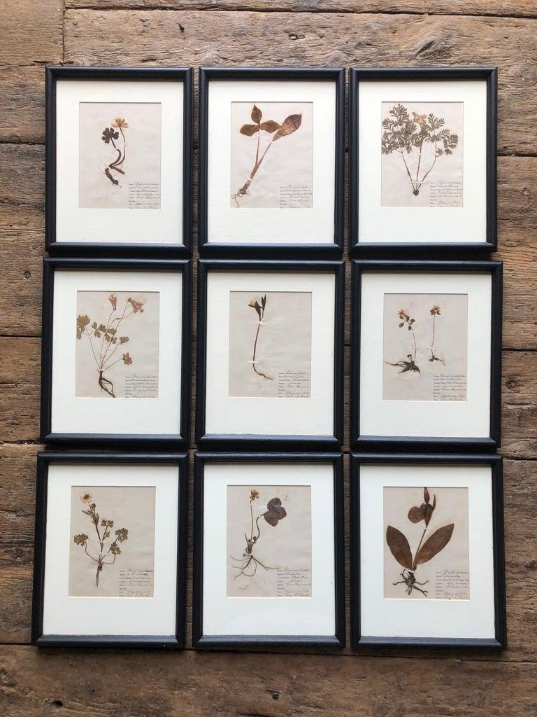Other Set of 9 Pressed Botanical Specimens For Sale