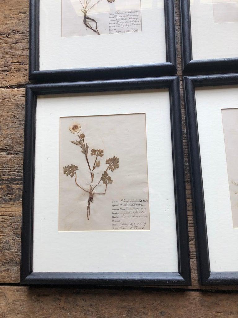 American Set of 9 Pressed Botanical Specimens For Sale