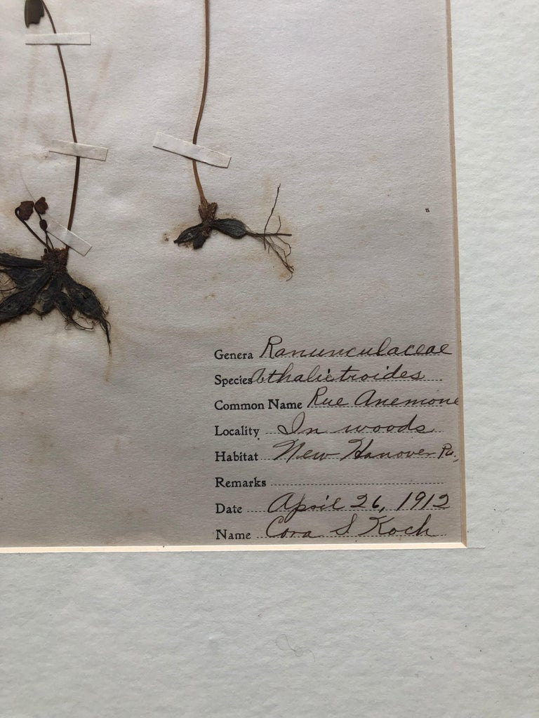 Set of 9 Pressed Botanical Specimens In Good Condition For Sale In Doylestown, PA