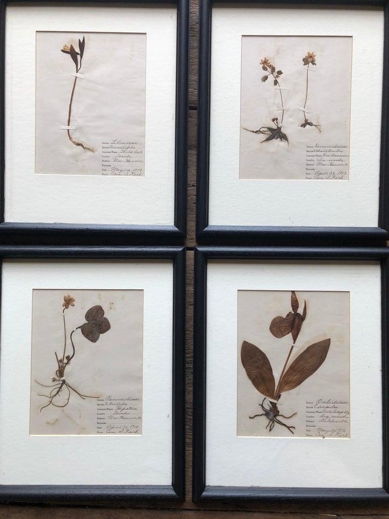 Paper Set of 9 Pressed Botanical Specimens For Sale