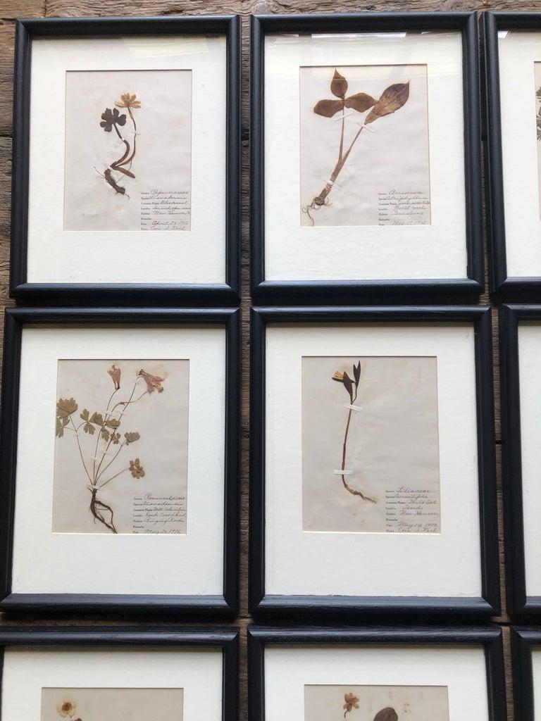 Set of 9 Pressed Botanical Specimens For Sale 1