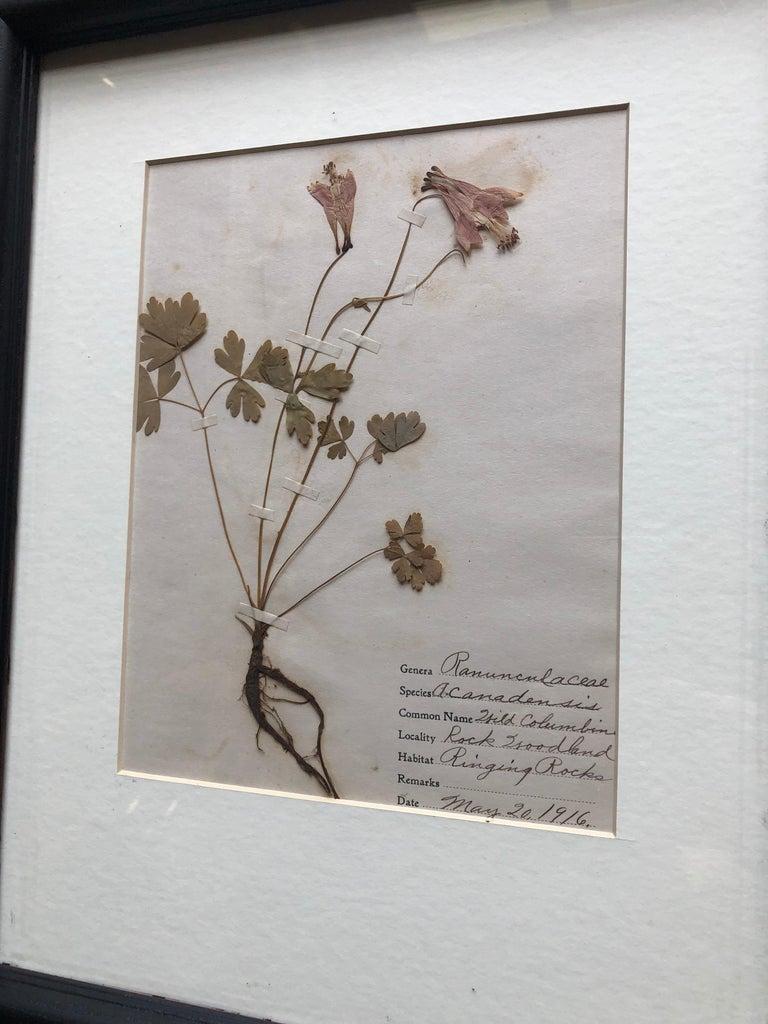 Set of 9 Pressed Botanical Specimens For Sale 2