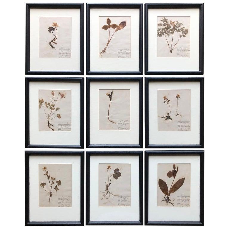 Set of 9 Pressed Botanical Specimens For Sale