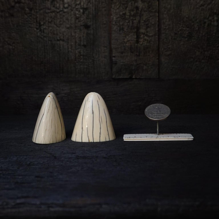 Set of Art Deco Tip of Walrus Tusks Salt and Pepper Shakers For Sale 6
