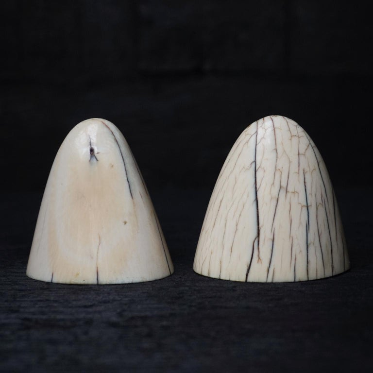 Set of Art Deco Tip of Walrus Tusks Salt and Pepper Shakers In Good Condition For Sale In Haarlem, NL