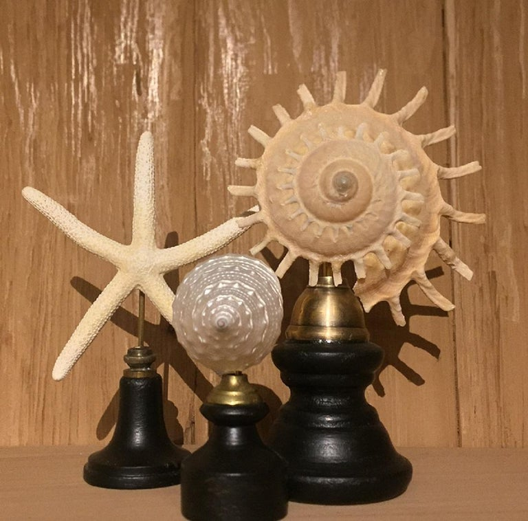 Set of Early 20th Century Seastars and Shells For Sale 1