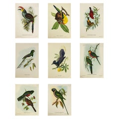 Set of Eight Bird Pictures Prints by John Gould