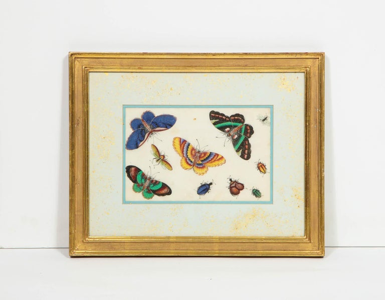 Set of Eight Chinese Rice Paper Paintings of Butterflies and Insects For Sale 5