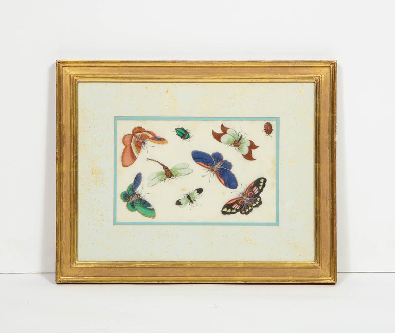 Set of Eight Chinese Rice Paper Paintings of Butterflies and Insects For Sale 9
