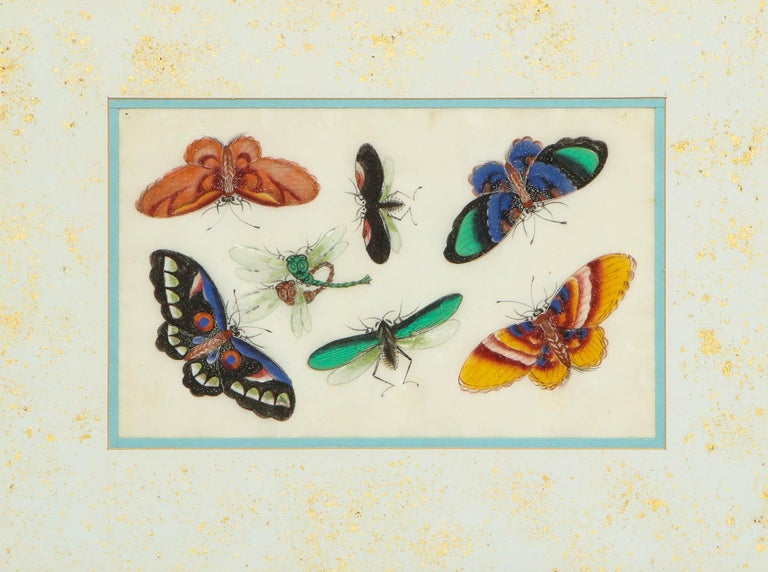 Set of Eight Chinese Rice Paper Paintings of Butterflies and Insects For Sale 12