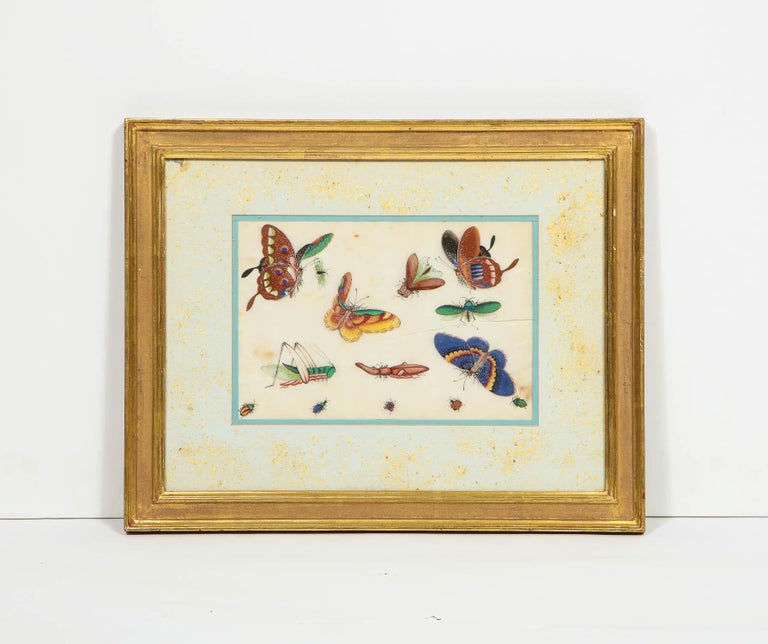 Set of Eight Chinese Rice Paper Paintings of Butterflies and Insects For Sale 13