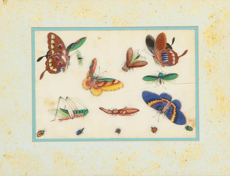 Set of Eight Chinese Rice Paper Paintings of Butterflies and Insects For Sale 14