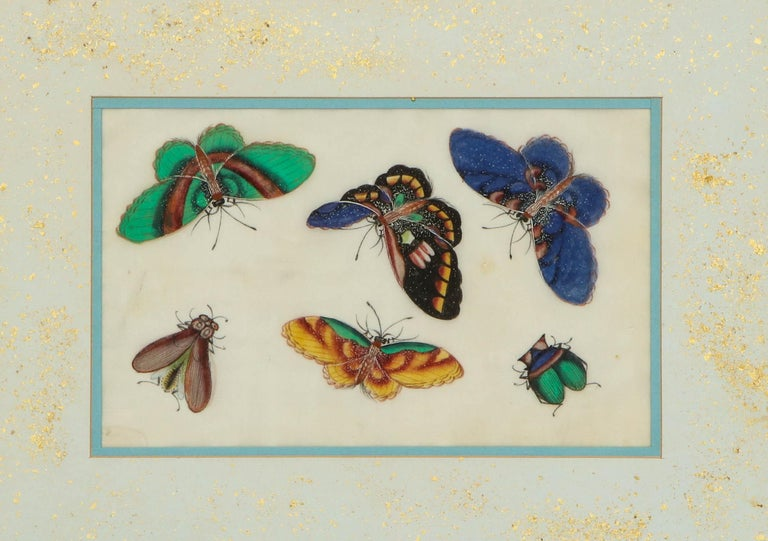 Chinese Export Set of Eight Chinese Rice Paper Paintings of Butterflies and Insects For Sale