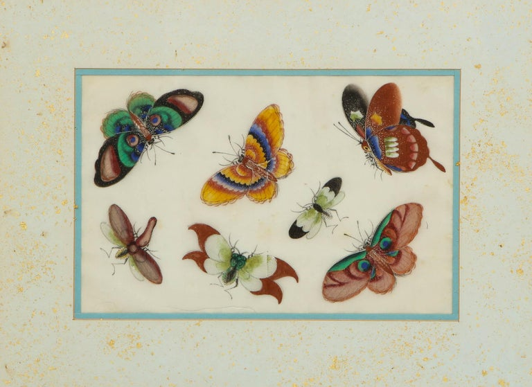 Set of Eight Chinese Rice Paper Paintings of Butterflies and Insects For Sale 2