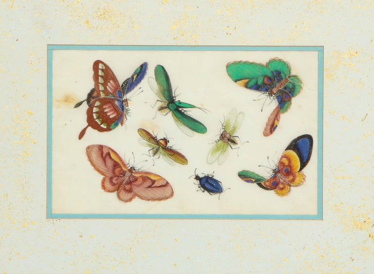 Set of Eight Chinese Rice Paper Paintings of Butterflies and Insects For Sale 4