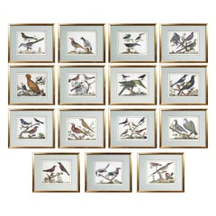 Set of Fifteen Framed Hand Colored Engravings of Birds by Francois N Martinet