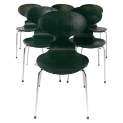 Set of Five Dark Green Ant Chairs, Model 3101, Designed by Arne Jacobsen, 1960s
