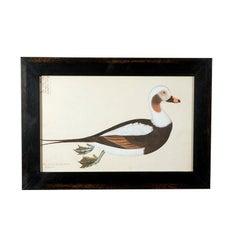 Set of Five Framed Duck Prints