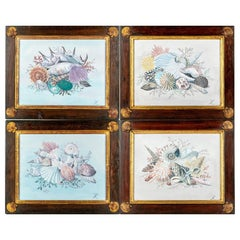 Set of Four 19th Century Watercolors of Sea Shell Vignettes